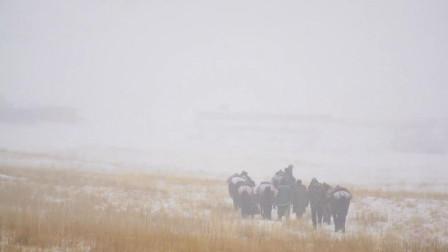 新疆高山医疗队,冒风雪骑马翻越2500米峭壁,免费为牧民看病40年