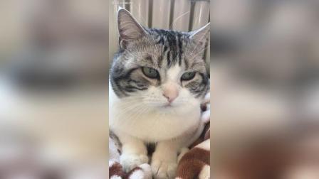 乖乖哒猫咪宝贝[飞吻][飞吻][图片评论