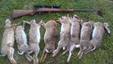 澳洲兔子泛滥成灾,数量曾达到100亿之多,请求中国吃货出动