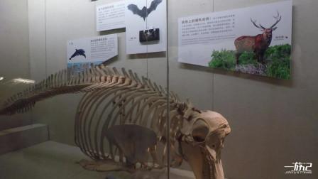 广东广州:广东省博物馆,恐龙化石展览,大饱眼福的机会来了