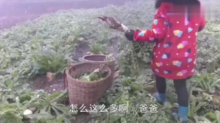 农村王四准备去吃刨猪汤,还背了1篓萝卜送去,