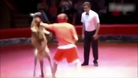 人和袋鼠打架,你见过没?笑死了!