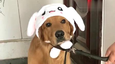 狗狗嫌帽子不好看,死活不愿出去玩,看把它委屈的