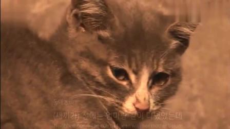 看哭!小猫守着妈妈的尸体,叼来肉给妈妈,自己却吃树根