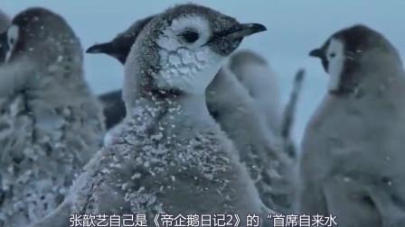 《帝企鹅日记2》:帝企鹅的繁衍和成长的跌宕曲折和千难万险