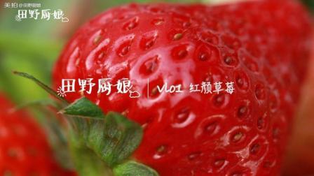 【田野厨娘】vlog 红颜草莓