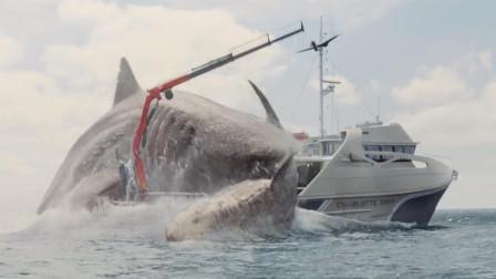 深海巨鲨长达40米,跃出海面后,把游轮都撞翻了