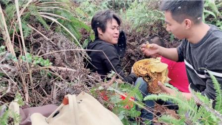 大年初一爬山遇见山货,分享野外找蜂技巧,教大家如何跟踪蜂路