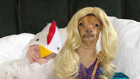 美国最时尚的宠物狗,丑成一只网红狗,能灵活驾驭各种装扮!
