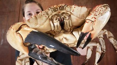 """世界上最重的螃蟹, 一只重量能达到72斤,被称为""""皇帝蟹""""!"""