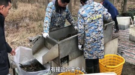 农历腊月二十八,黄鳝涨价到了多少钱一斤?农村大叔亲口告诉你!