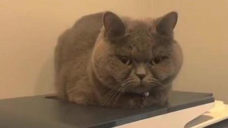 如何正确的欺负一只熟睡的小猫,看完你懂了没有