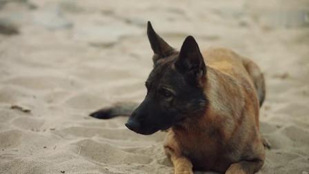 男子在包子下毒想毒害狗狗,不想适得其反被狗狗追得满地跑!