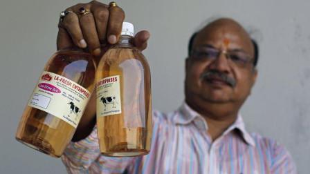 印度的牛也开挂?印度专家称,能够在牛尿里提取出金子!