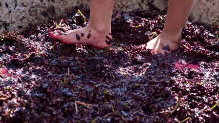 葡萄酒真的好喝吗?你可知道最顶级的葡萄酒,都是脚踩出来的?