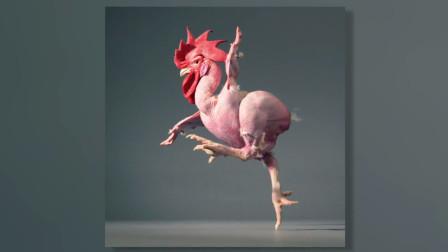 以色列培育出的无毛鸡,据说很美味,却很少有人敢吃!