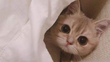 猫猫的各种搞笑视频,喜欢猫的不能错过!