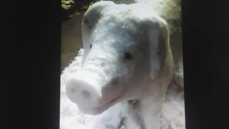 猪妈妈带领着小猪跑到马路上了