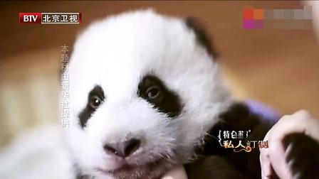 庞大的熊猫家族,这些调皮熊都是它的孩子
