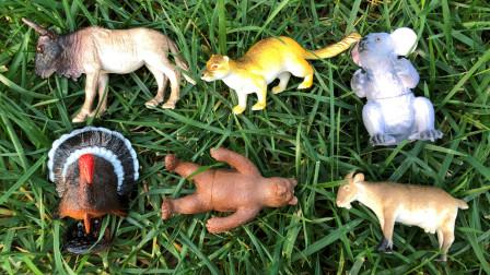 认识雄火鸡等7种野生陆地动物,乐宝识动物