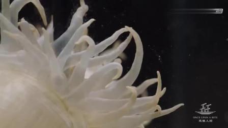 比螃蟹还要鲜味在3倍以上的海葵做成的美食,快来看看!