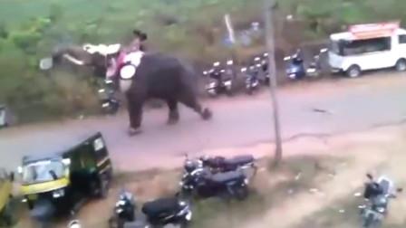 愤怒的大象,来看看大象发飙是什么样,这下涨见识了