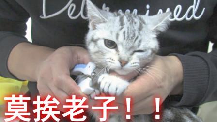 主人给猫咪剪指甲,猫咪表示强烈抗议,最后被命运扼住喉咙!