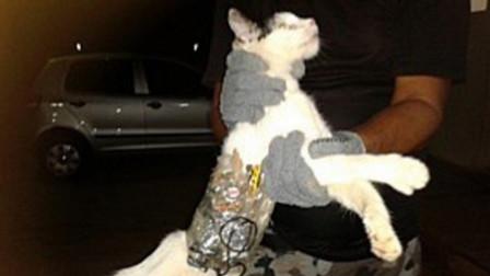 猫咪胆子小?俄罗斯战斗猫了解下,因给监狱里的主人送手机被捕!