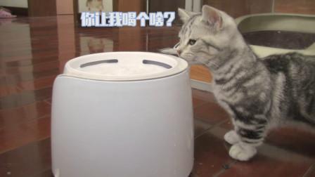 给小猫买了个饮水器,但是高估了猫腿的长度,结果就很尴尬了!