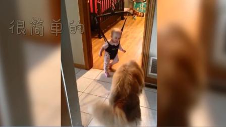 宝宝在弹跳椅上不会弹跳,狗狗亲自示范, 接下来狗狗的动作, 成精了