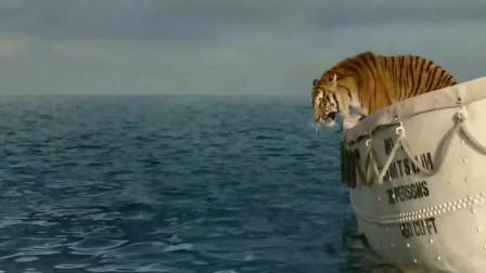 少年派学习捕鱼给老虎吃,没想到老虎自己跳海了,天助我也