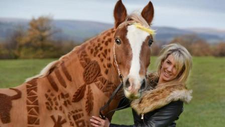 半岛奇闻 英国最特别的理发师,专门给马剪头发,在马的毛皮上设计图案!