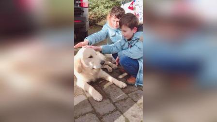 弟弟超喜欢狗狗!