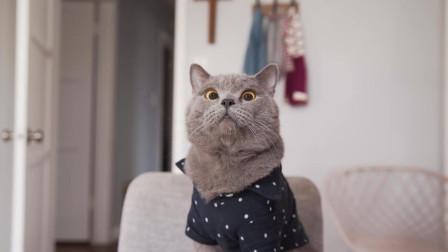猫成精了,学会给主人安排相亲了
