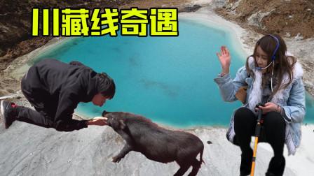 收了个干儿子,遇到个小姐姐,来到了稻城亚丁!川藏线奇遇第三期