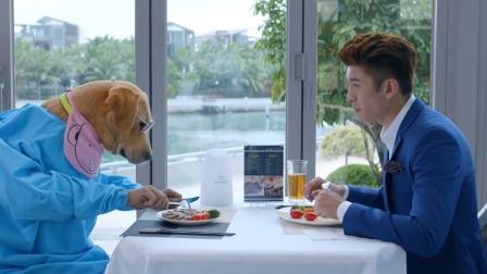 鲍宇和小七一起吃饭,小七居然还戴上墨镜拿起刀叉,好酷一狗狗!