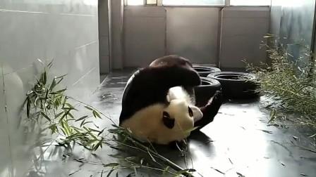 不想运动的熊猫宝宝,像极了不想上班的我!