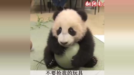 轻松一刻 动物搞笑短片合集