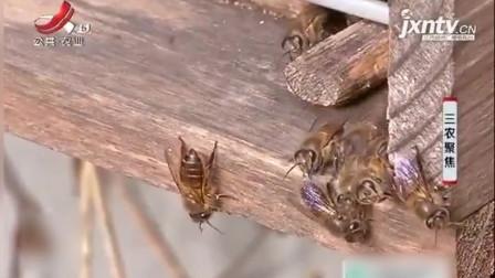 三农聚焦 第一季 男子养蜜蜂挣钱,辛苦一两个月,挣了5万多块