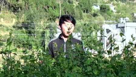 贵州山歌,刘代贤演唱《哥是炉山唱歌人》一个人这样唱山歌会火了吗