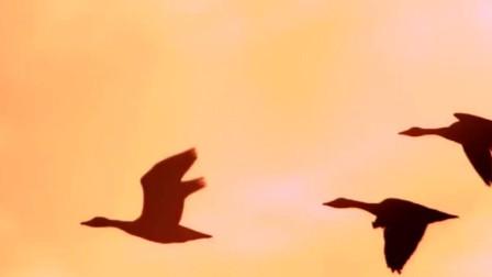 万物生长:柳青带着秋水,独自开车去沙漠,伤心