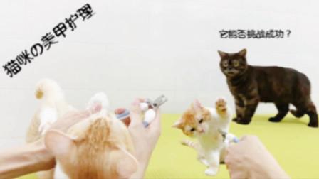 一秒Get猫剪指甲新姿势,主人:你感动吗?喵:老子记住你了