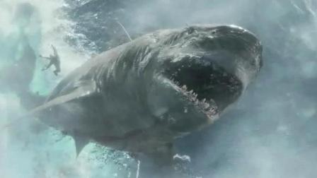 斯坦森说, 嗜血是鲨鱼的本性, 但是报复就是对人类的挑战, 必须干掉