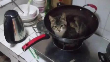 好长时间没刷锅,都长猫了