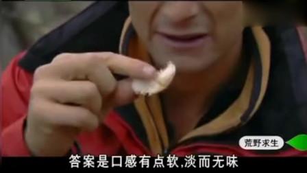 荒野求生:贝尔寻找食物,在树上找到小蘑菇球,看着像诱人的奶酪