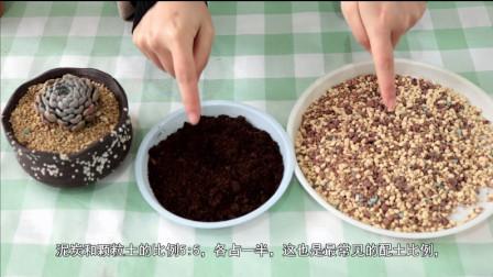 最简单的多肉植物配比方法,新手也能驾驭,养根爆盆再也不是问题