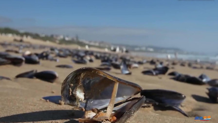 美国又一生物泛滥,1年花30亿消灭,中国吃货却表示小意思!