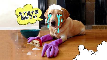 狗狗为了这个家,简直操碎了心!