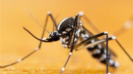 为什么蚊子的肠道细菌可以阻断疟疾传播