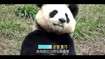 熊猫做好充足运动之后,表演自己的爬树技能